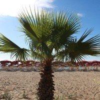 Club Esse Sunbeach beach in concession 4