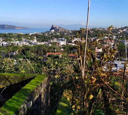 What to do in january in Ischia